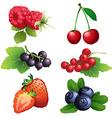 Ripe strawberry raspberry cherry blackberry black vector image