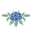background blueberries fruit vector image vector image