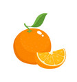bright set of colorful juicy orange vector image