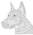 doberman pinscher dog adult coloring page vector image