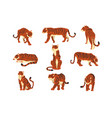 powerful tiger in different actions set of cartoon vector image