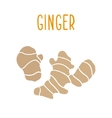 Ginger root isolated on white vector image