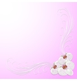 Delicate corner frame with orchid flowers vector image vector image