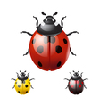 Ladybug isolated on white background vector image vector image