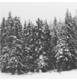 Pine forest in winter landscape nature Vintage vector image