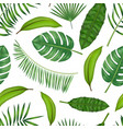 realistic detailed green leaves of plants vector image vector image