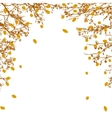 Tree branches and orange leaves