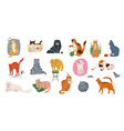 cat pets set cute kittens vector image