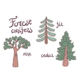 Forest conifer trees set Isolated plan vector image vector image