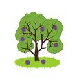 Plum Tree Icon vector image vector image