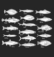 silhouettes fish seafood retro icons vector image