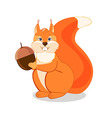 Red squirrel sits and holds in paws acorn brown vector image