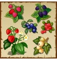 Great berry set mix of six types of berries vector image vector image