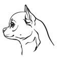Image chihuahua dog on white background