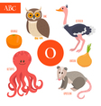 Letter O Cartoon alphabet for children Owl opossum vector image vector image