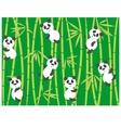 panda bears vector image