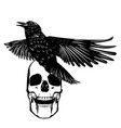 grunge human skull with raven vector image vector image