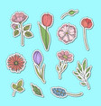 hand drawn flowers stickers set vector image vector image