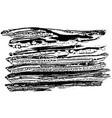 ink sponge background vector image vector image