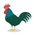 rooster bird isolated icon vector image vector image