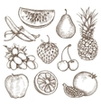 Fruit sketches hand drawing vector image