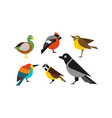 birds set duck bullfinch sparrow tit crow vector image vector image