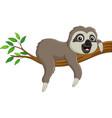 cute basloth on tree branch vector image vector image
