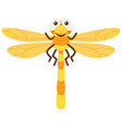dragonfly with yellow wings vector image vector image