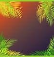 summer time palm leaf background vector image