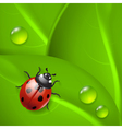 Green background with ladybird and dew vector image