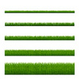 green grass isolated white background vector image vector image