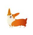happy dog welsh corgi style flat vector image