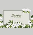 jasmine flower banners design for tea vector image vector image