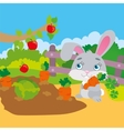 Rabbit Gnawing Carrot In Garden vector image
