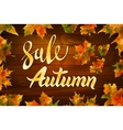 autumn special sale vintage typography vector image