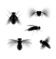 blurred fly vector image