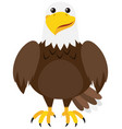 brown eagle on white background vector image vector image