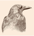 drawing black raven vector image