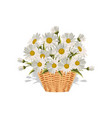 field daisies in a wicker basket vector image vector image