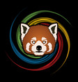 red panda head cartoon bear face vector image vector image
