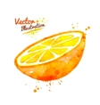 Watercolor half of an orange vector image