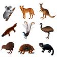 australian animals vector image