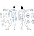 Full length front back views of a standing man vector image