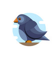 pigeon character color flat pigeon vector image