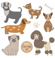 Cute dogs set vector image
