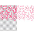 flying translucent petals of sakura flowers on a vector image vector image