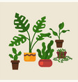lovely flat design domestic plants featuring vector image
