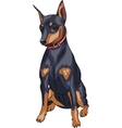 Miniature pinscher dog vector image vector image