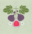 ripe red figs leaves flowers shabby vector image