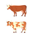 set of different cows isolated colore vector image vector image